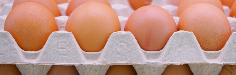 parere-efsa-data-di-scadenza-uova